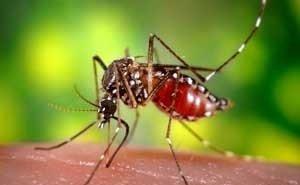 Комары в Краснодаре стали агрессивнее