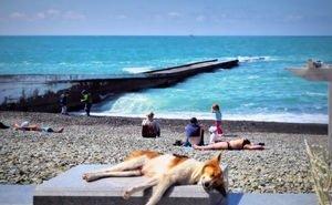 Максимальную загрузку кубанских курортов ожидают в августе