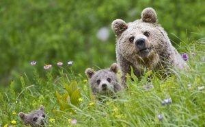 В Нацпарке Сочи задержан охотник, пытавшийся застрелить медведя