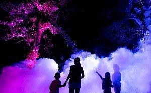 Ночные шоу парка «Южные культуры» заставили сочинцев забыть о тишине и покое