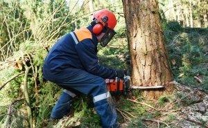 На горе Малый Ахун варварски уничтожают краснокнижные деревья