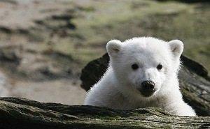 Все частные мини-зоопарки в Сочи будут закрыты