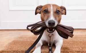 Первышов: Площадок для выгула собак не хотят сами жители