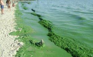 В Анапе позеленело море