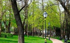 Первышов обещает краснодарцам в 10 раз больше зелёных зон