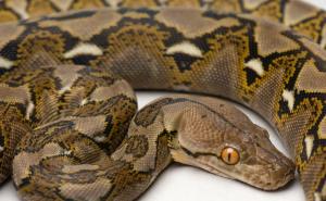 В квартире одного из краснодарцев обнаружили 16 змей
