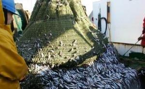 В ЗСК обсудили проблемы рыбной отрасли