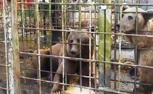 Мужчина, чьи медведи загрызли в Сочи ребёнка, пойдёт под суд