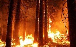 Двое туапсинцев за сожжённые 89 га леса заплатят 900 тысяч рублей