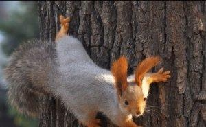Городским лесам Кубани хотят придать официальный статус