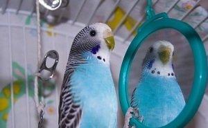 Из-за болезни попугаев на Кубани пришлось вводить карантин