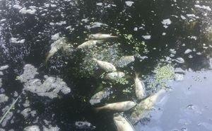 Виновных в экологической катастрофе на реке Адагум так и не нашли