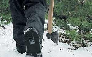 На Кубани усиливают контроль за вырубкой хвойных деревьев