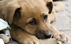 В Краснодаре планируют строить два приюта для животных