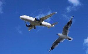 Отпугивать птиц в аэропорту Сочи будет уникальная техника