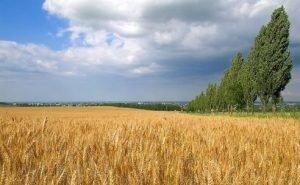 Экологи дали неутешительные прогнозы на 2021 год по Кубани