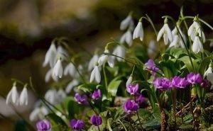 Первоцветы в Нацпарке Сочи взяты под охрану