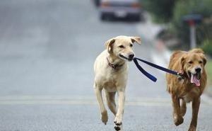 В мэрии Краснодара не видят проблем с площадками для выгула собак