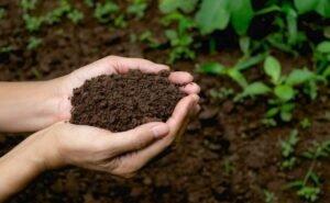 Засуху в этом году Кубани не прогнозируют