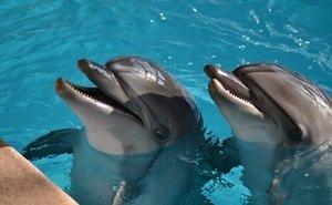 В Сочи не могут решить судьбу изъятых у браконьеров дельфинов