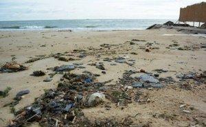 Штормом в Анапе выбросило на берег мёртвых птиц и дельфинов