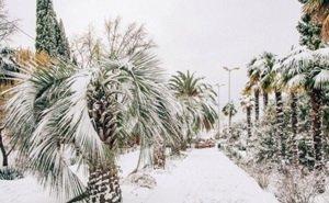 В обильных снегопадах в Сочи никаких аномалий синоптики не видят