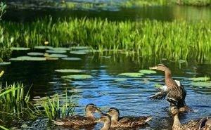 На создание «водно-зелёного каркаса» Краснодару потребуется 15 лет