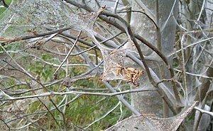 «Апокалипсис какой-то!»: жители Анапы напуганы нашествием пауков