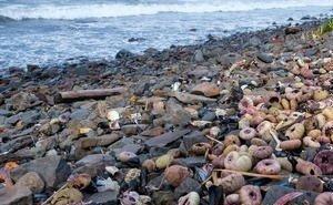 Ветеринары назвали возможные причины гибели птиц на побережье Чёрного моря