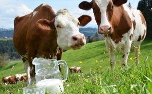 На Кубани обсудили перспективы развития животноводства