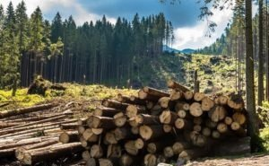 Сочинцы возмущены вырубкой леса