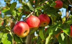 Власти Кубани рассчитывают на хороший урожай зерновых, овощей и фруктов