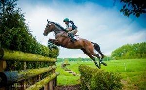 Тренировать спортивных лошадей в Сочи будут по особой методике