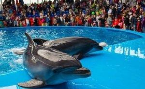 На Кубани могут исчезнуть дельфинарии