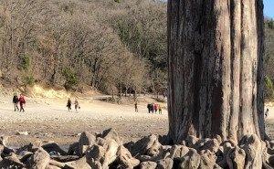 Туристы уничтожают уникальные кипарисы на озере под Анапой
