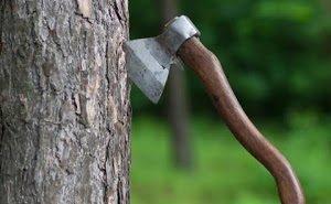 WWF обвинило Минприроды Кубани в незаконной вырубке охраняемых лесов
