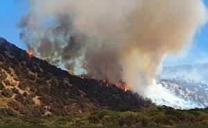 На восстановление после пожара «Утришу» потребуется от 70 до 100 лет