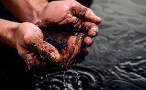 На Кубани случилась экологическая катастрофа