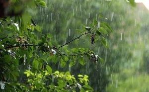 Власти Краснодара рассказали, зачем поливать деревья после дождя