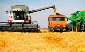 Кубань собрала рекордные 12,4 млн тонн зерна