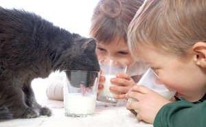 Кубань лидирует в ЮФО по маркировке молочной продукции
