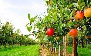 Кубань станет площадкой для цифрового садоводства