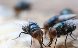 Жители Кубани жалуются на полчища стрекоз и мух