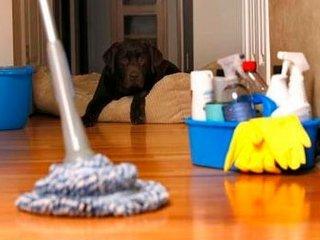 Клининговая компания «Чисто-Всем»: доступная всем чистота