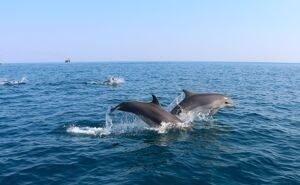 В Сочи спасают даже не наших дельфинов