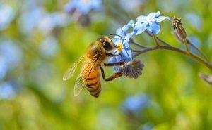 Массовую гибель пчёл на Кубани проверит прокуратура