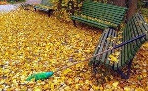 В Сочи начался сезон листопадов