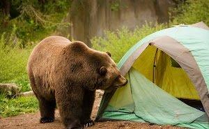 В горах Сочи на туристов напал медведь