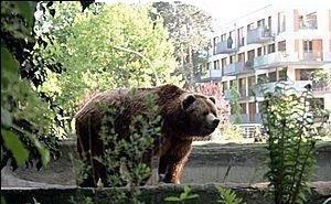 На улицах Сочи заметили медведя